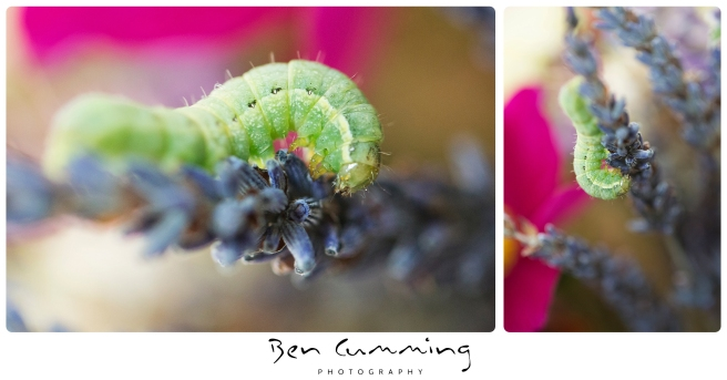 Wedding Flowers caterpillar